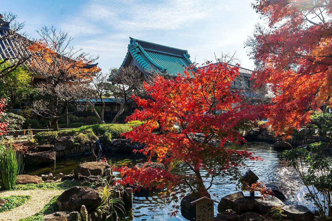Фотография Япония Kamakura осенние Пруд храм Города Деревья Осень Храмы город дерево дерева деревьев