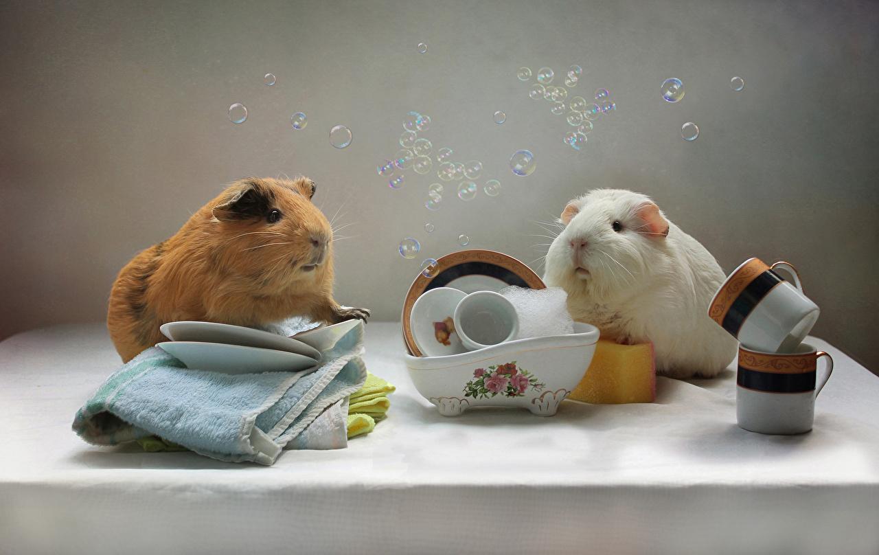 Фото Морские свинки Двое чашке Полотенце Животные Натюрморт 2 два две вдвоем Чашка животное