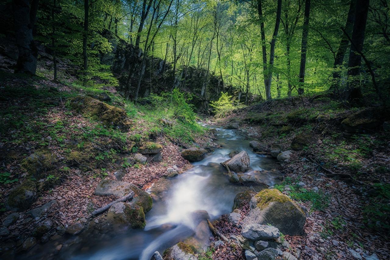 Обои для рабочего стола Армения Ручей Природа Леса мхом Камень ручеек лес Мох мха Камни