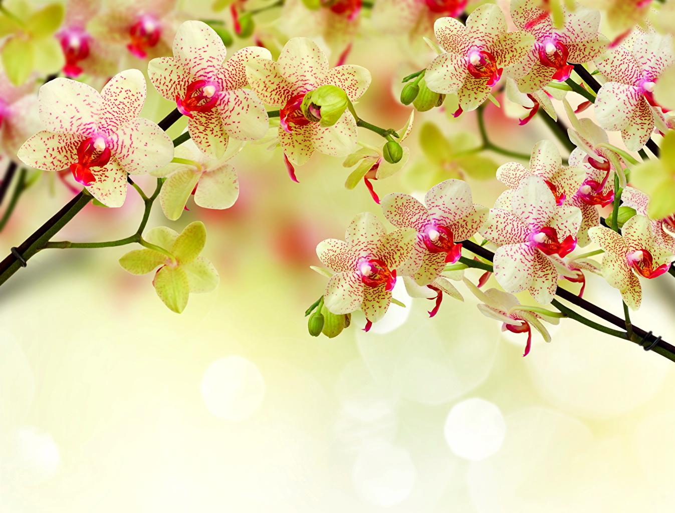 Картинки орхидея цветок вблизи Орхидеи Цветы Крупным планом