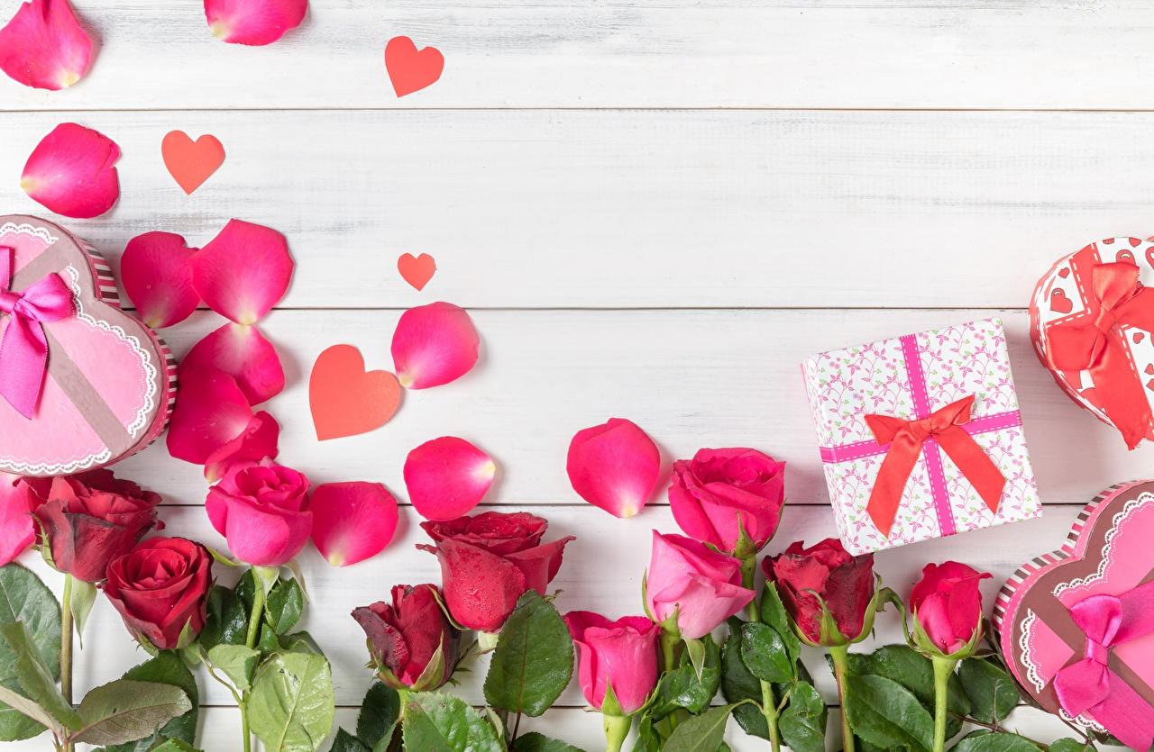 Фотографии роза Лепестки Цветы Шаблон поздравительной открытки Доски Розы лепестков цветок
