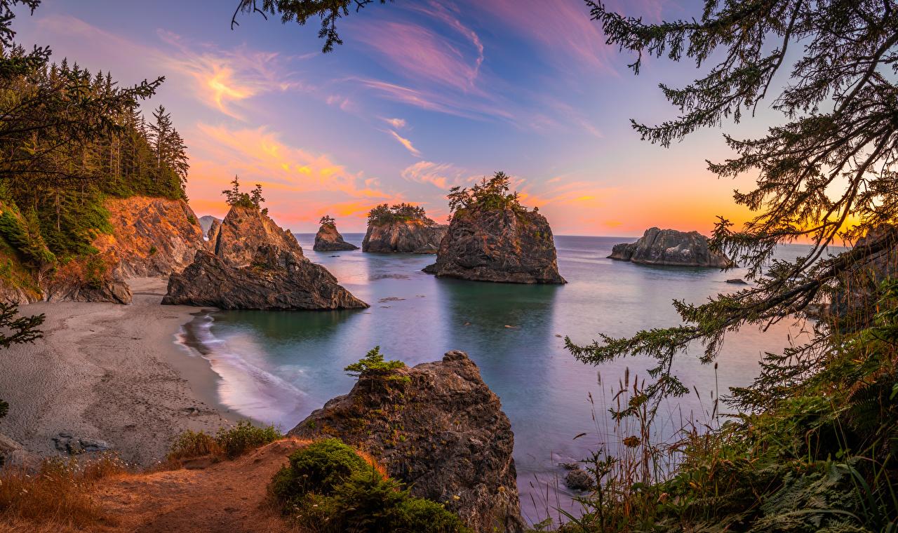 Фотография штаты Oregon скале Природа Побережье дерево США америка Утес Скала скалы берег дерева Деревья деревьев