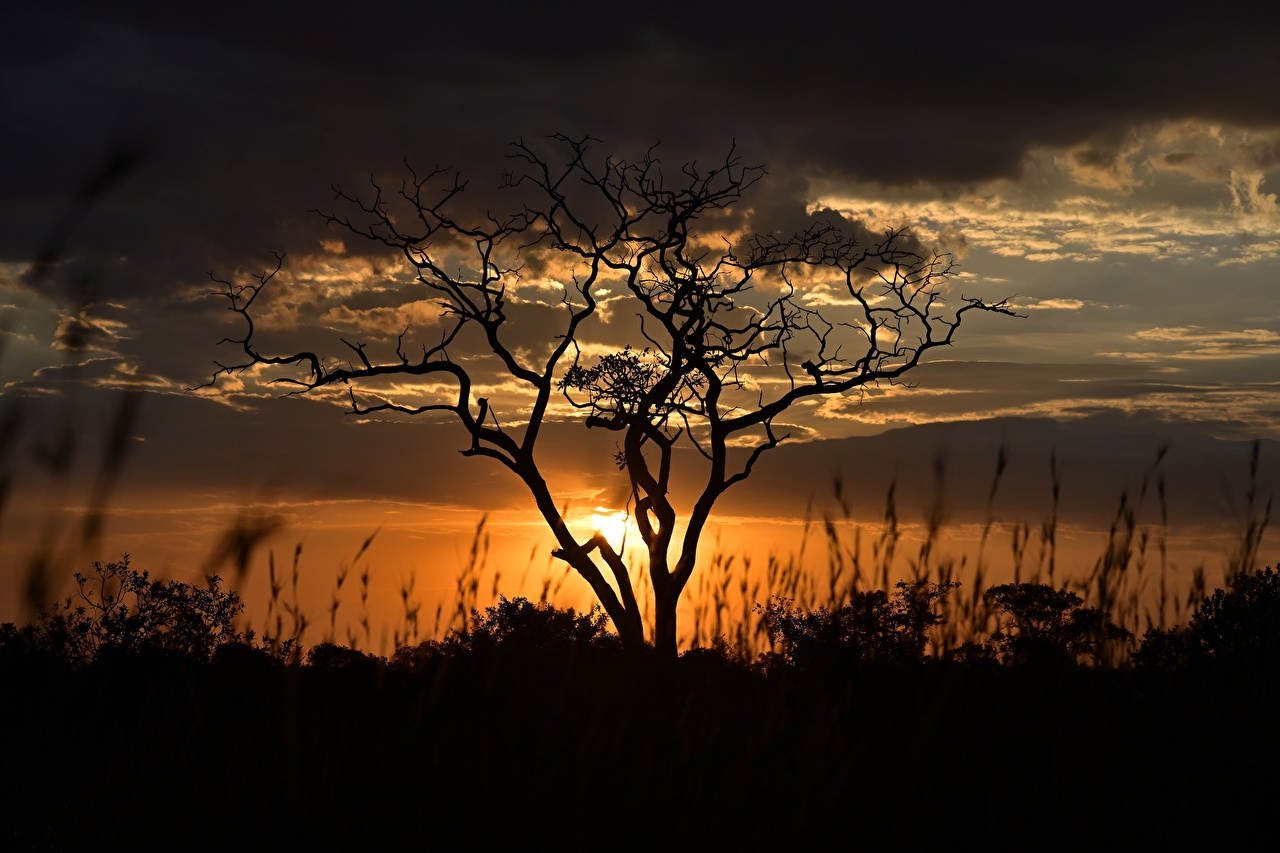 Обои для рабочего стола силуэты Tanzania Природа Рассветы и закаты Вечер ветвь облако Деревья Силуэт силуэта рассвет и закат Ветки ветка на ветке дерево Облака дерева облачно деревьев