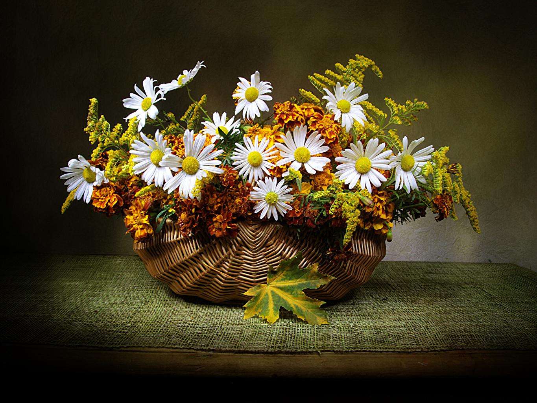 Фото цветок ромашка Бархатцы Корзинка стола Цветы корзины Корзина Ромашки Стол столы