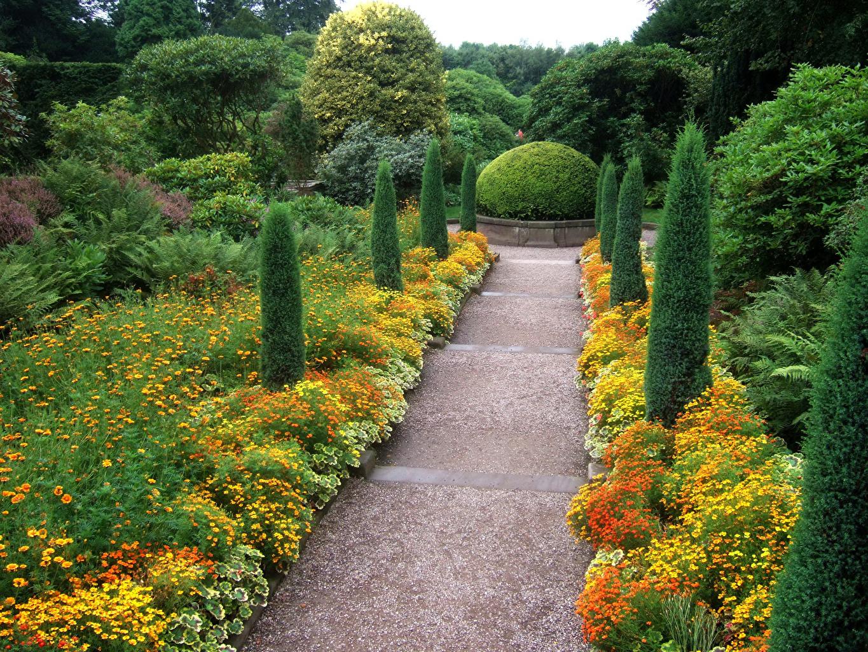Обои для рабочего стола Великобритания Biddulph Grange Garden Природа Сады Бархатцы Кусты дерево кустов дерева Деревья деревьев