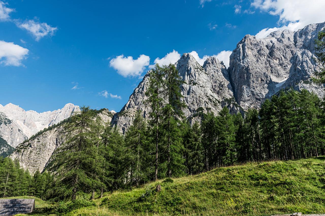 Картинка Словения ели гора Природа Ель Горы