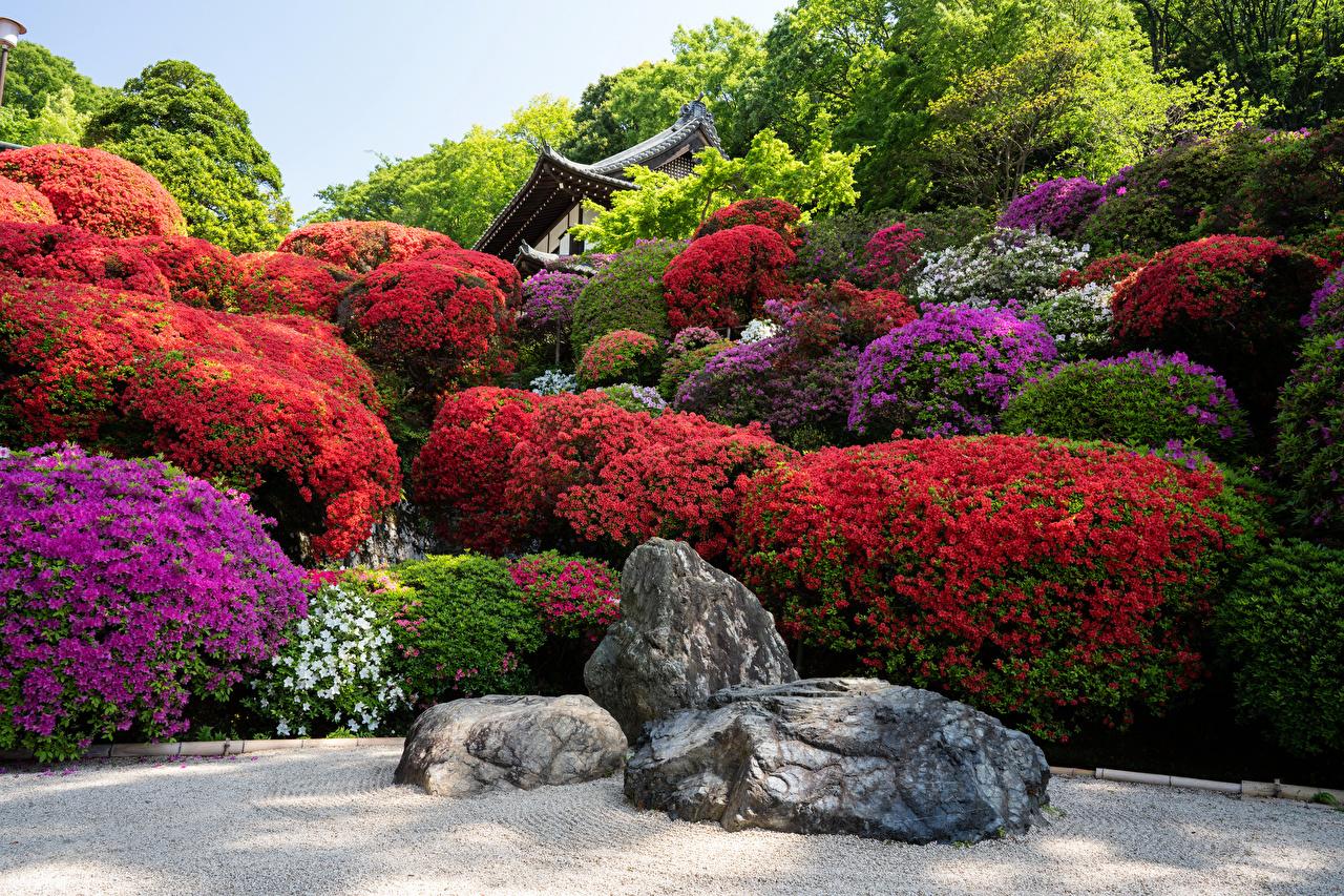 Фотографии Киото Япония Природа Сады Камни Рододендрон Камень