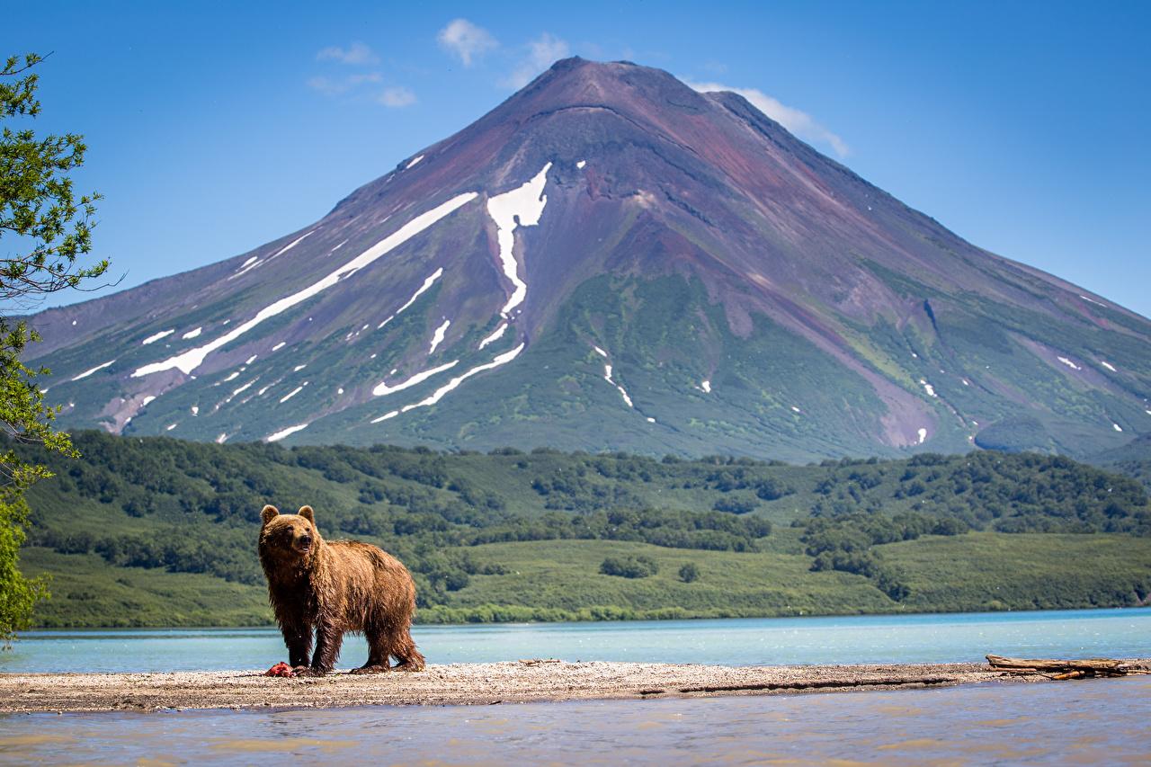 Фото Камчатка Бурые Медведи Россия Медведи Kurile Lake, South Kamchatka reserve гора Природа Озеро Гризли медведь Горы