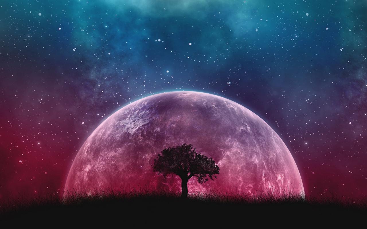Обои для рабочего стола Планеты Фэнтези Ночь Деревья