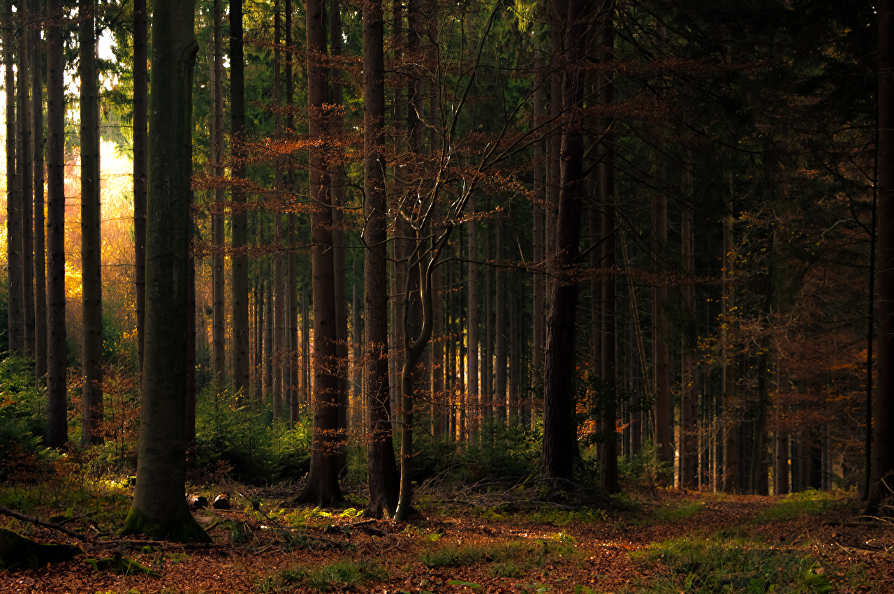 Обои для рабочего стола Листья Осень Природа лес деревьев лист Листва осенние Леса дерево дерева Деревья