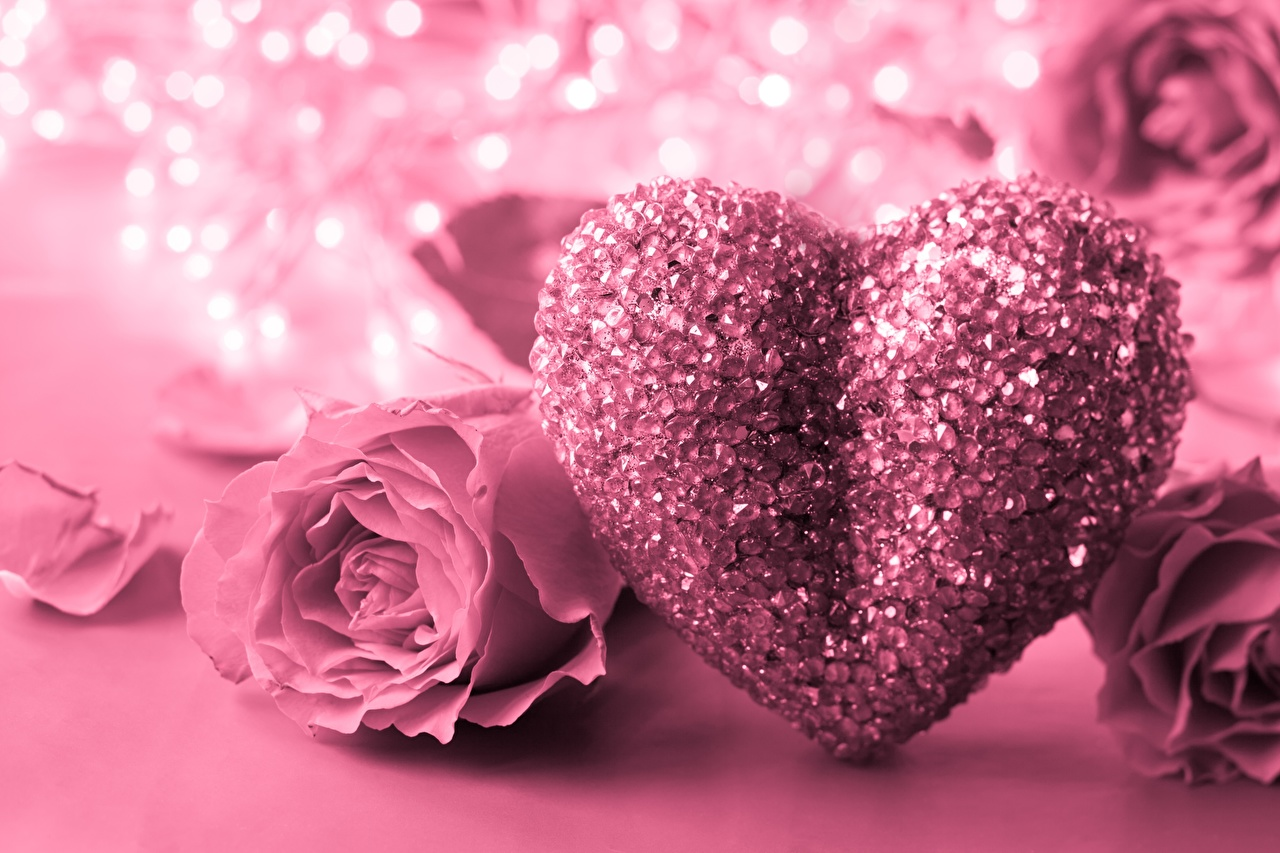 Фото День святого Валентина Сердце Розы Розовый
