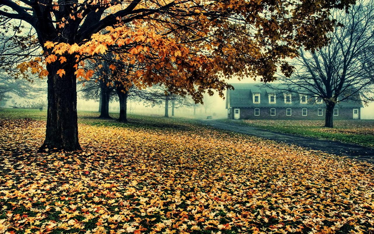 Фотография Листья Осень Природа Здания Деревья лист Листва осенние Дома дерева дерево деревьев