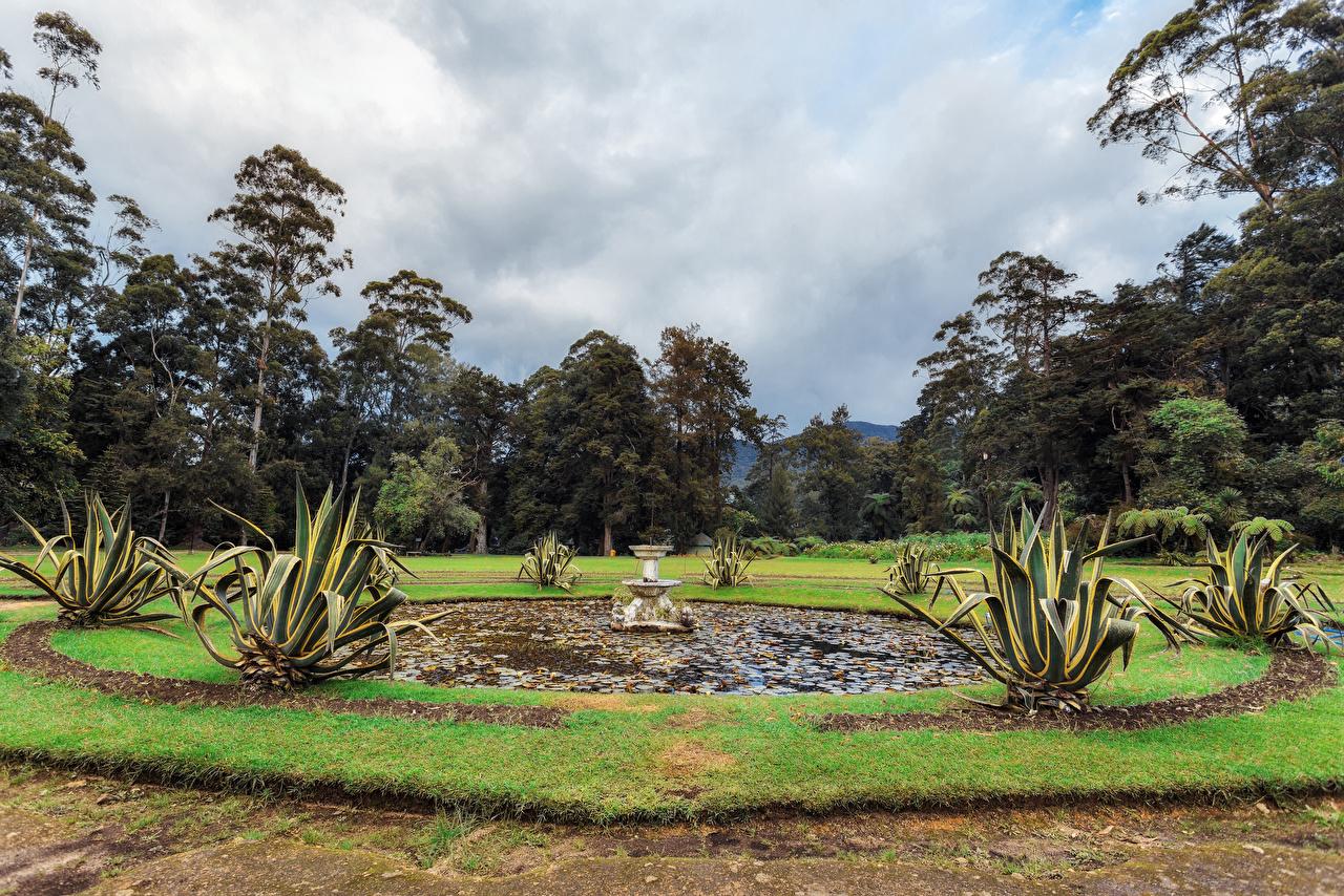 Картинка Шри-Ланка Фонтаны Queen Victoria Park Природа Парки деревьев дерево дерева Деревья