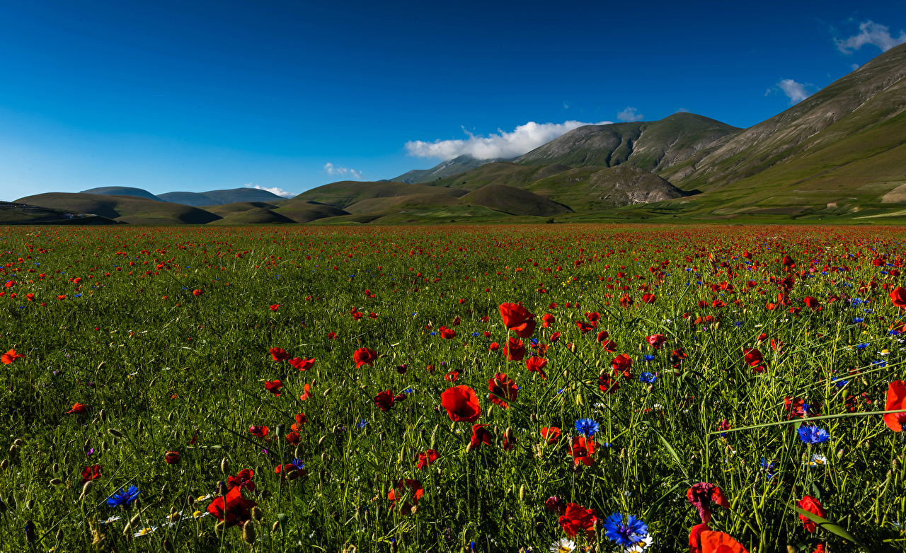 Картинка Италия Sibillini national park Природа холм Маки Поля Парки Васильки мак парк Холмы холмов