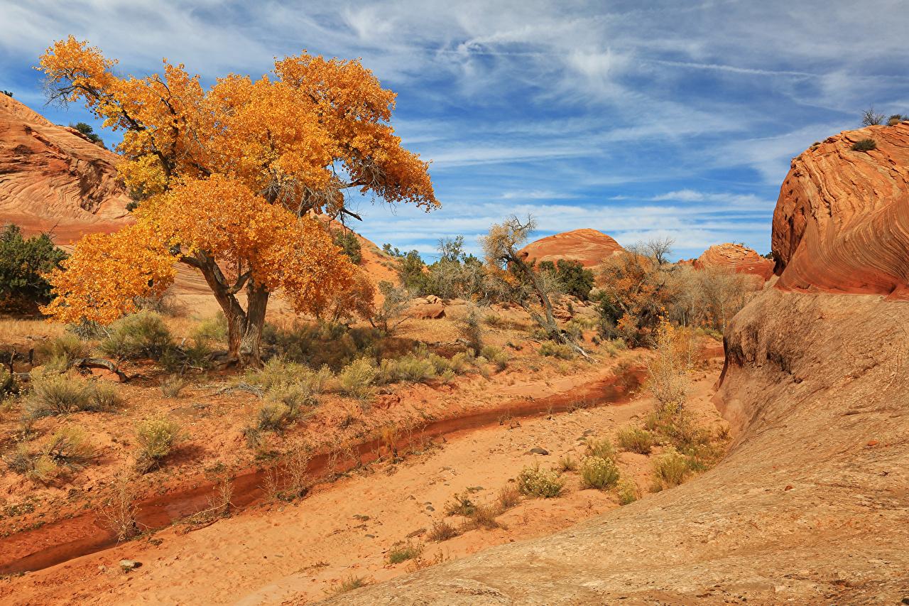 Картинки америка Utah Природа Небо Парки песка Деревья США штаты парк Песок песке дерево дерева деревьев