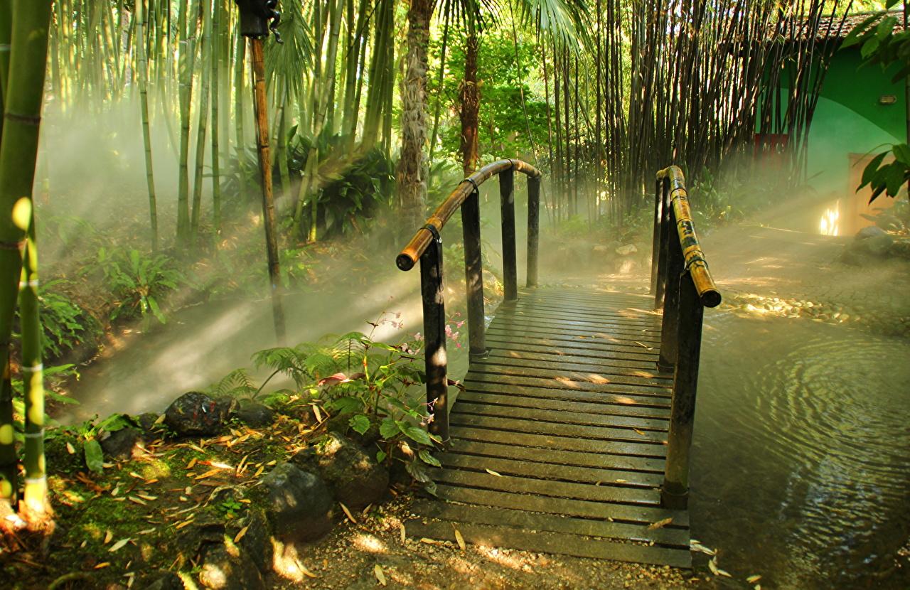 Фотографии Италия Lombardia Gardone Riviera by Andrei Antipin тумане мост Бамбук Природа Парки Туман тумана Мосты парк