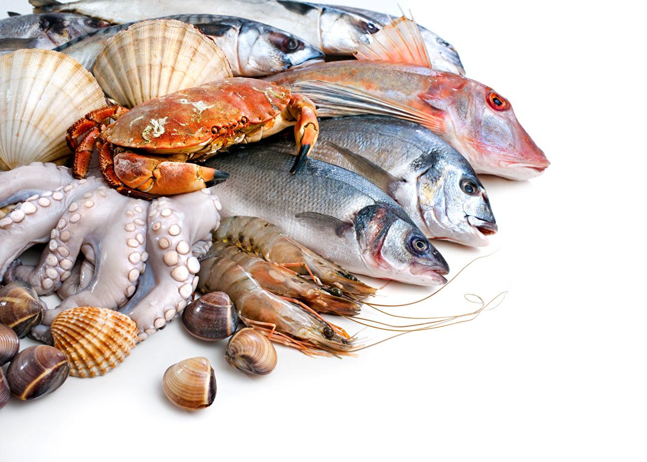 Обои для рабочего стола Рыба Крабы Креветки Еда белым фоном Морепродукты Пища Продукты питания Белый фон белом фоне