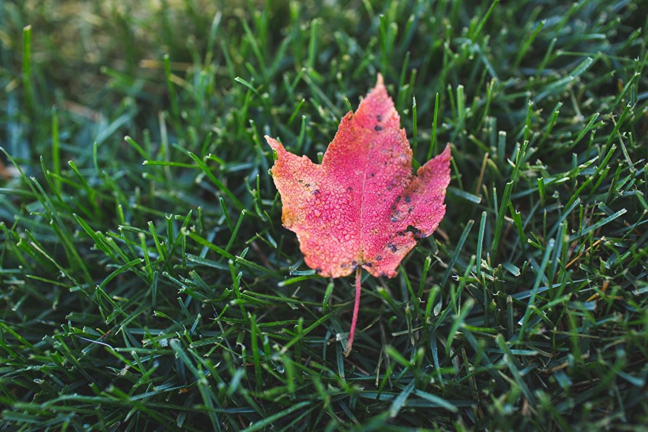 Фото лист Осень Природа траве Крупным планом Листва Листья осенние Трава вблизи