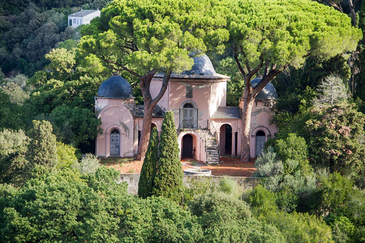 Фотография Франция Saint-Francois Corsica город дерева Здания Дома дерево Города Деревья деревьев