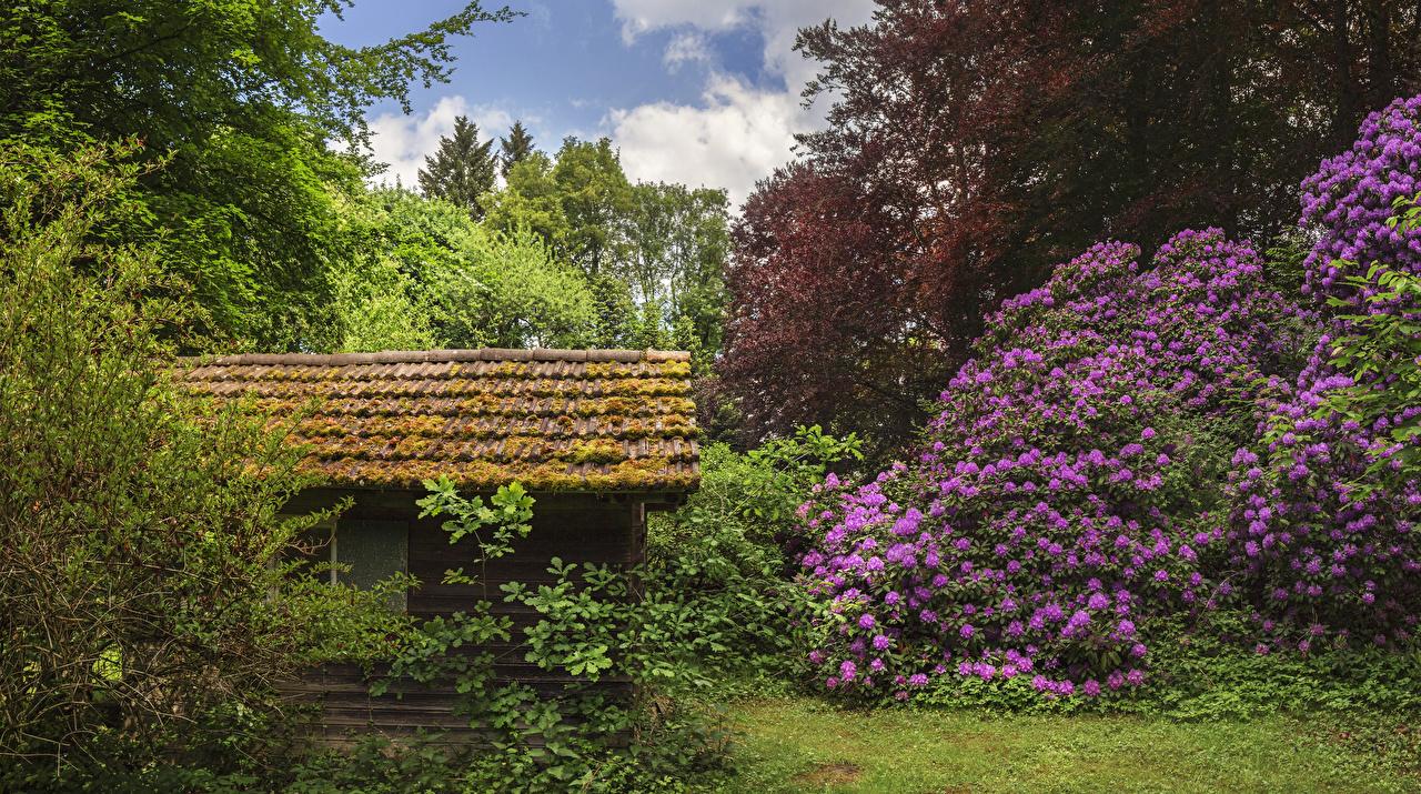 Картинка Германия Seyfriedsberg Castle park Природа Парки Рододендрон кустов Здания парк Дома Кусты