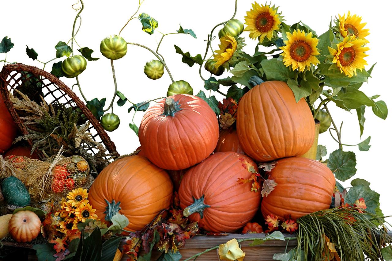 Картинки Тыква Осень Природа Подсолнечник вблизи Белый фон осенние Подсолнухи белом фоне белым фоном Крупным планом