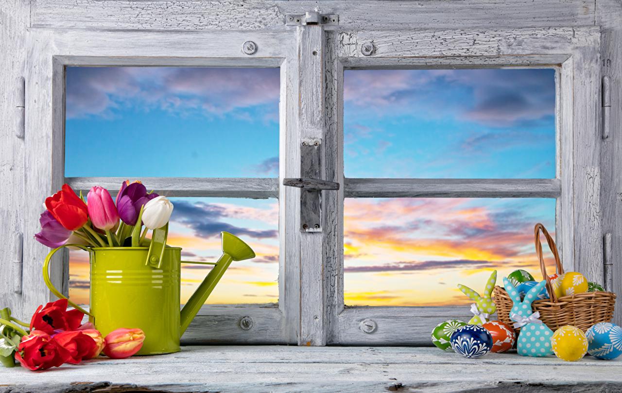 Картинки Пасха Кролики яйцо Тюльпаны цветок Корзинка Окно Продукты питания кролик яиц Яйца яйцами тюльпан Цветы Корзина корзины Еда окна Пища