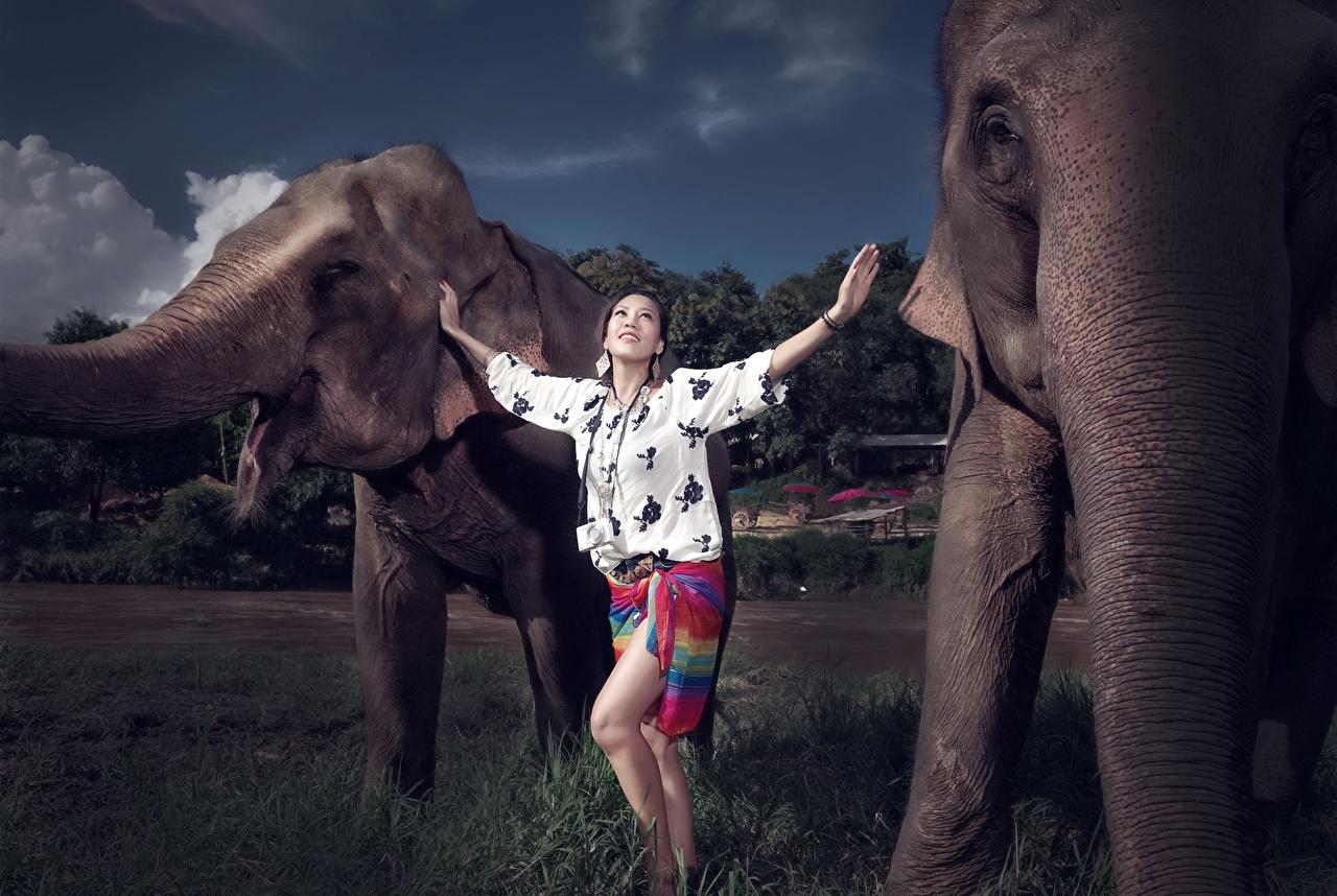 Картинки Слоны Девушки Азиаты Животные