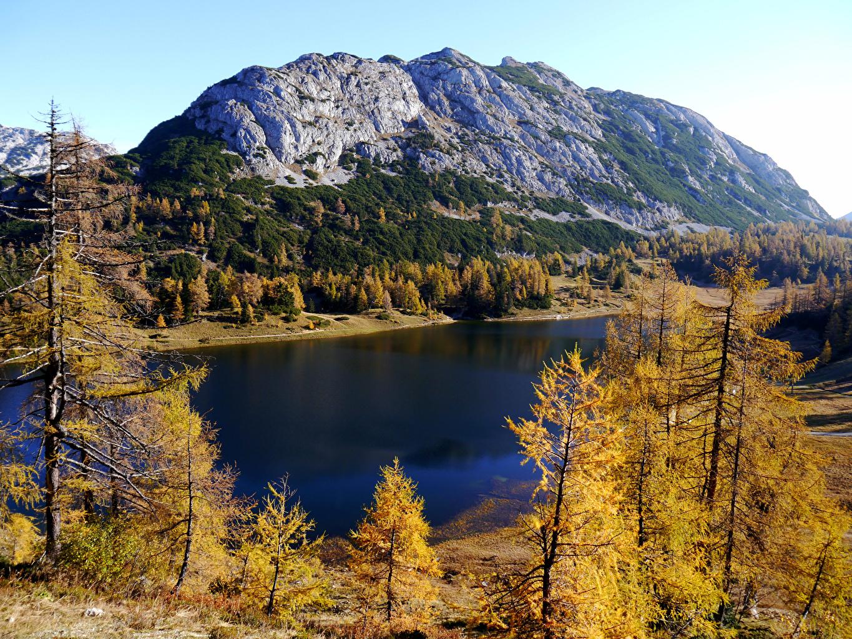 Фотография Австрия Tauplitz Styria Горы Осень Природа Озеро дерева гора осенние дерево Деревья деревьев