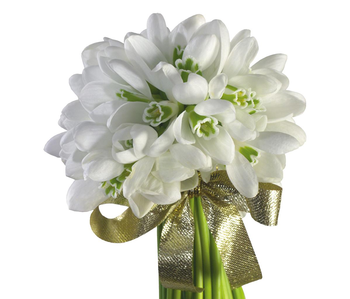 Фотографии букет Цветы Подснежники бантики белом фоне Букеты цветок Галантус бант Бантик Белый фон белым фоном