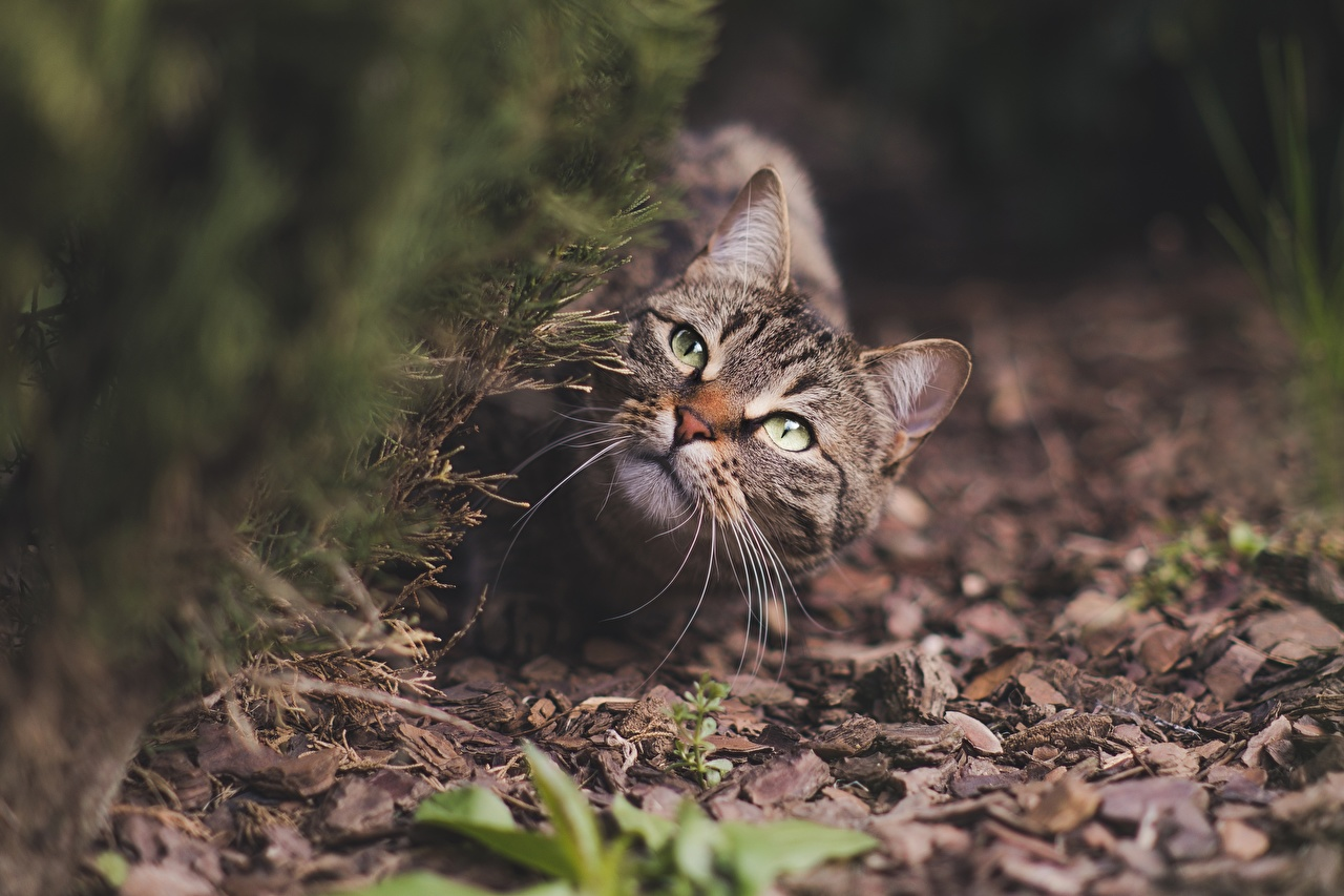 Фото кошка Размытый фон Усы Вибриссы смотрит животное кот коты Кошки боке Взгляд смотрят Животные