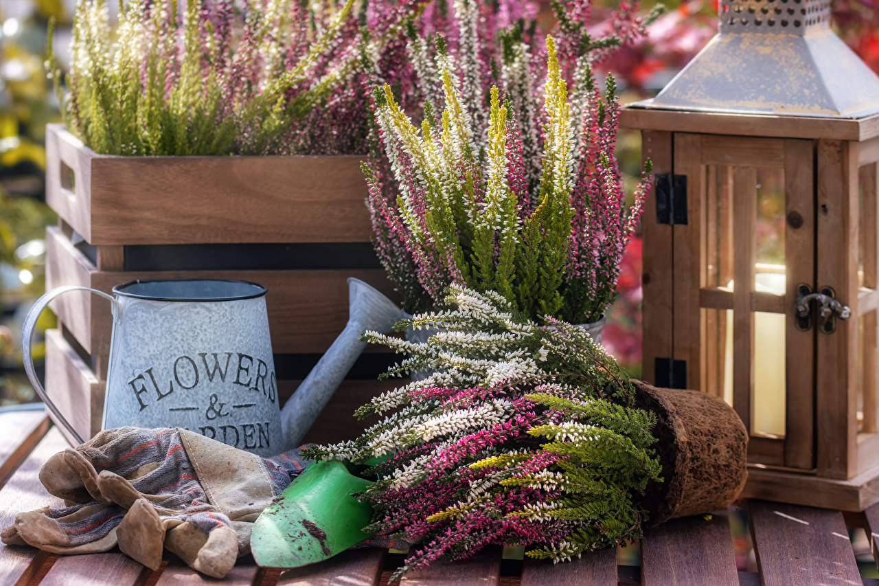 Обои для рабочего стола Calluna Цветочный горшок цветок Цветы