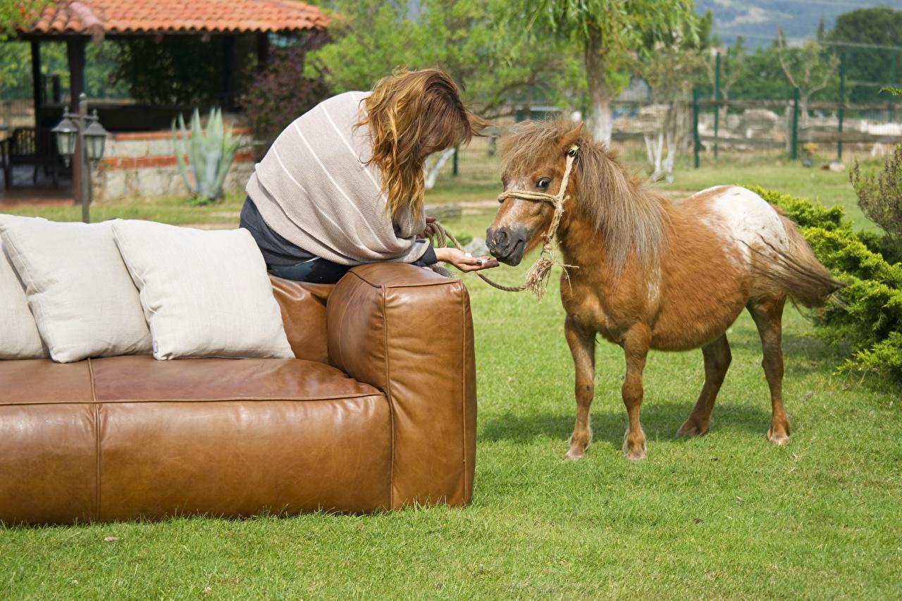 Фото лошадь шатенки Диван траве сидящие Подушки животное Лошади Шатенка сидя Сидит Трава диване подушка Животные