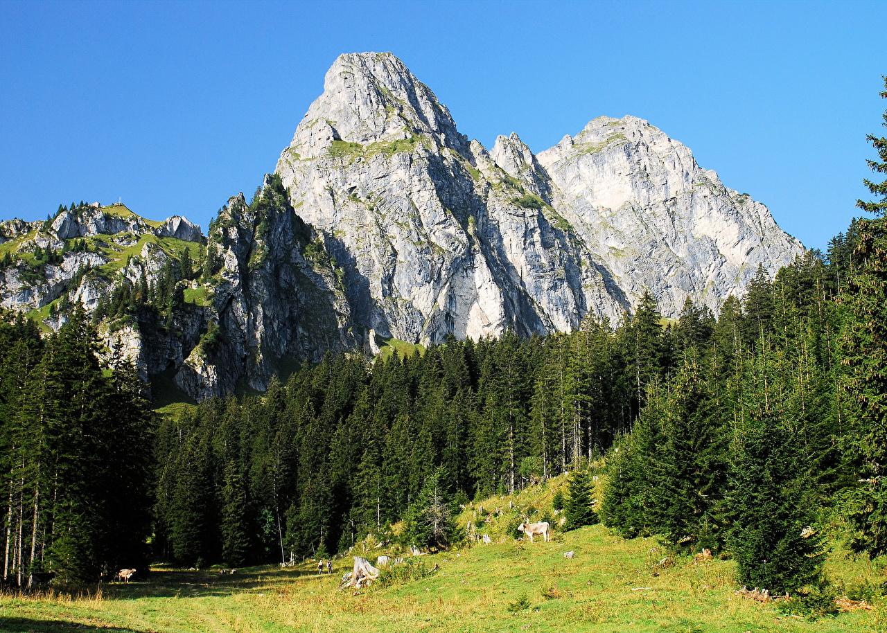 Обои для рабочего стола Альпы Австрия гора Природа Пейзаж альп Горы