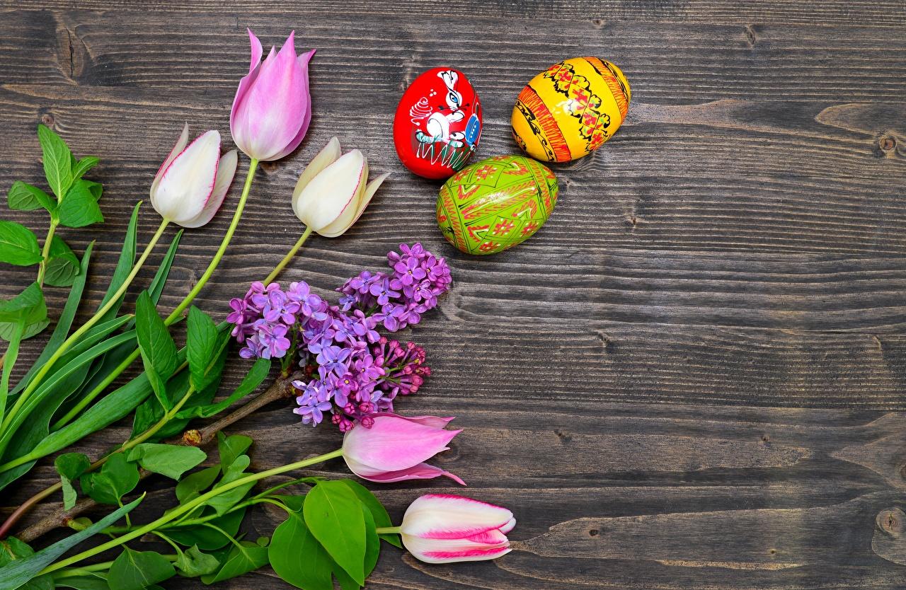 Картинки Пасха Яйца Тюльпаны Сирень цветок яиц яйцо яйцами тюльпан Цветы