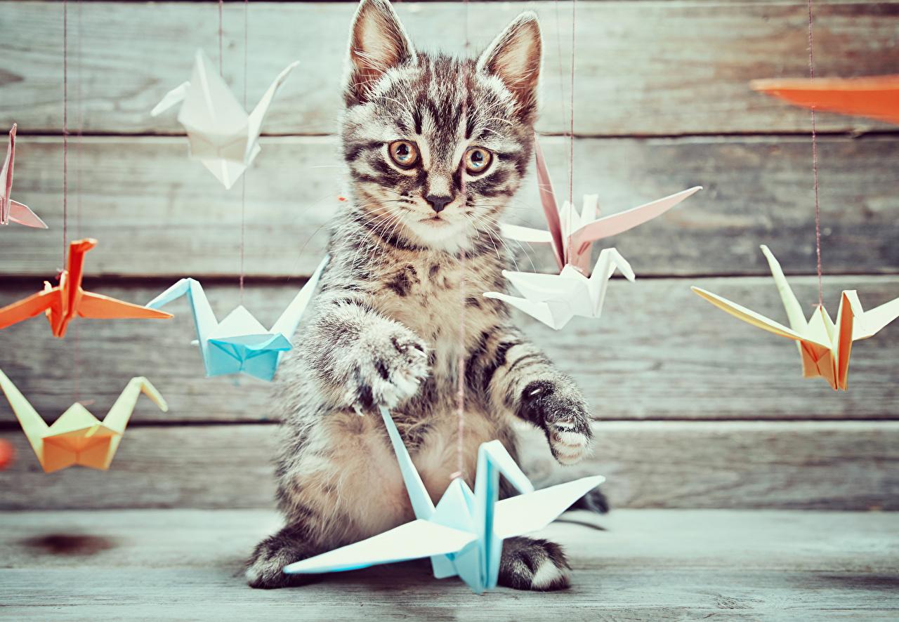 Картинки котенок коты Оригами животное Доски котят Котята котенка кот Кошки кошка Животные