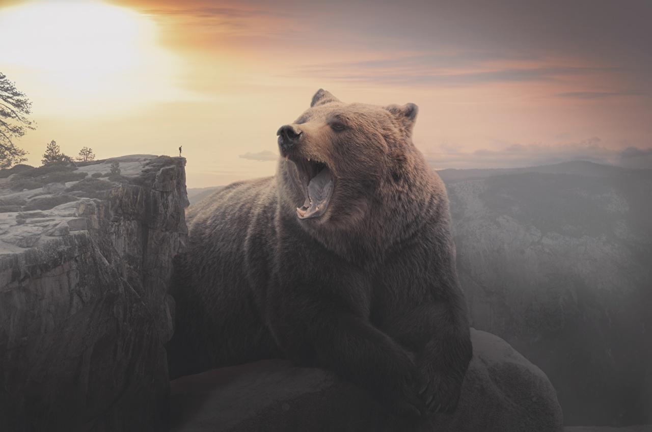 Фотография Бурые Медведи Медведи скале рассвет и закат Животные Гризли медведь Утес скалы Скала Рассветы и закаты животное