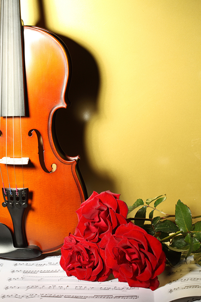 Фото скрипка Ноты роза красных цветок три  для мобильного телефона Скрипки Розы Красный красная красные Цветы Трое 3 втроем