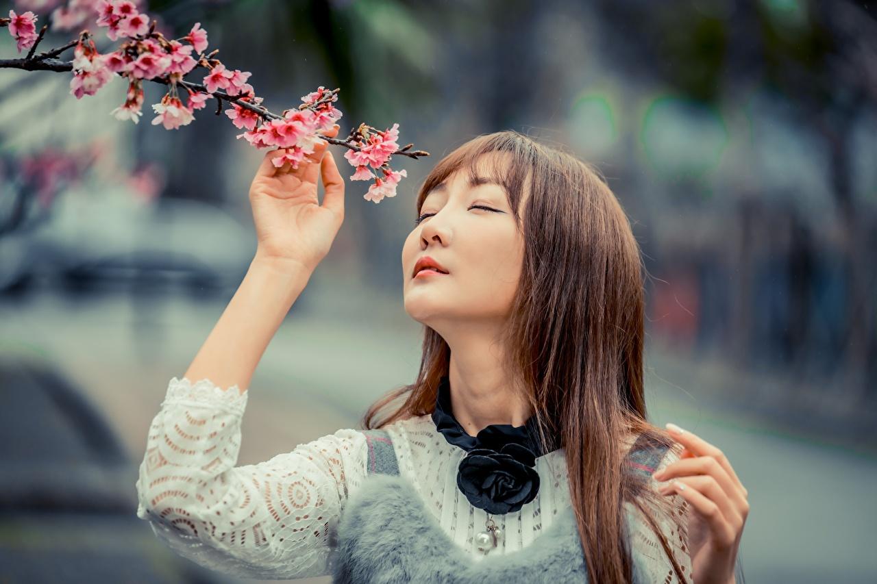 Обои для рабочего стола Шатенка Сакура боке девушка азиатка Ветки Цветущие деревья шатенки сакуры Размытый фон Девушки молодые женщины молодая женщина Азиаты азиатки ветвь ветка на ветке