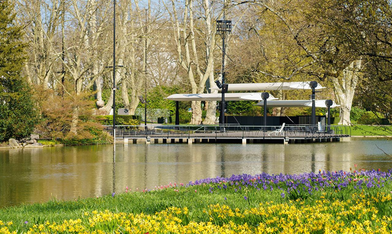 Фотографии Германия Karlsruhe Природа весенние Пруд Парки Нарциссы Весна парк