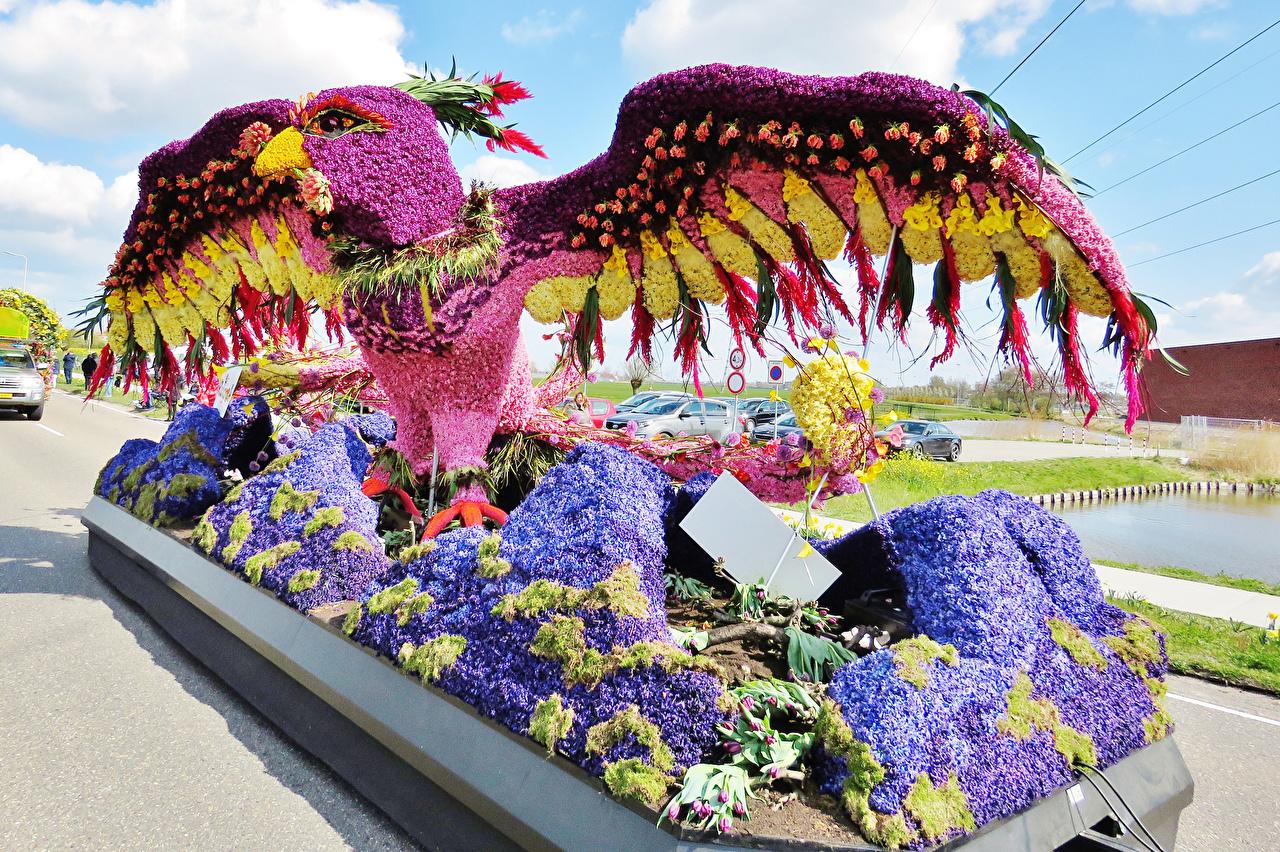 Фотография Попугаи Нидерланды Lisse Природа Парки Гиацинты Дизайн парк дизайна
