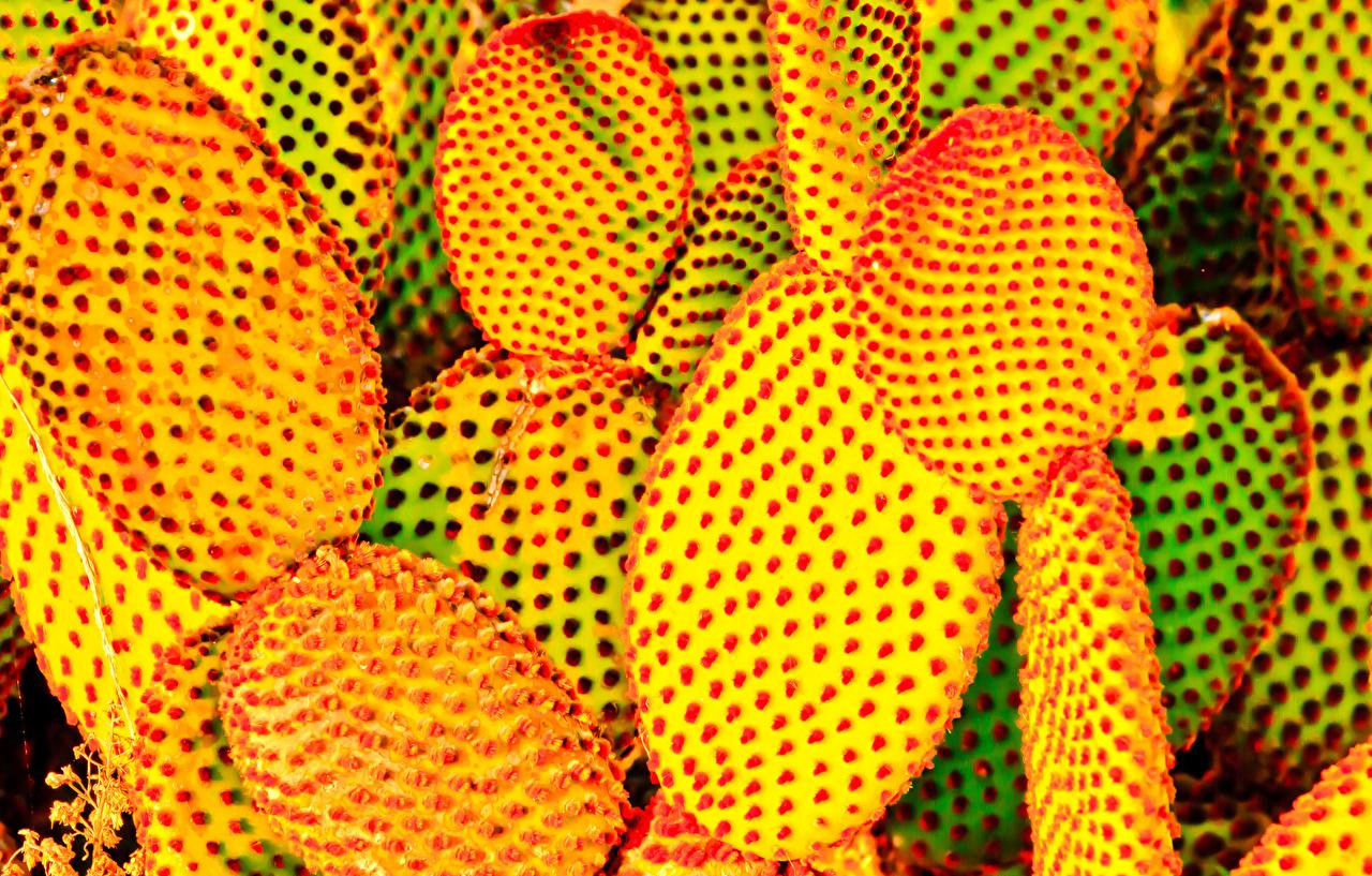 Фотографии Природа Кактусы вблизи Крупным планом