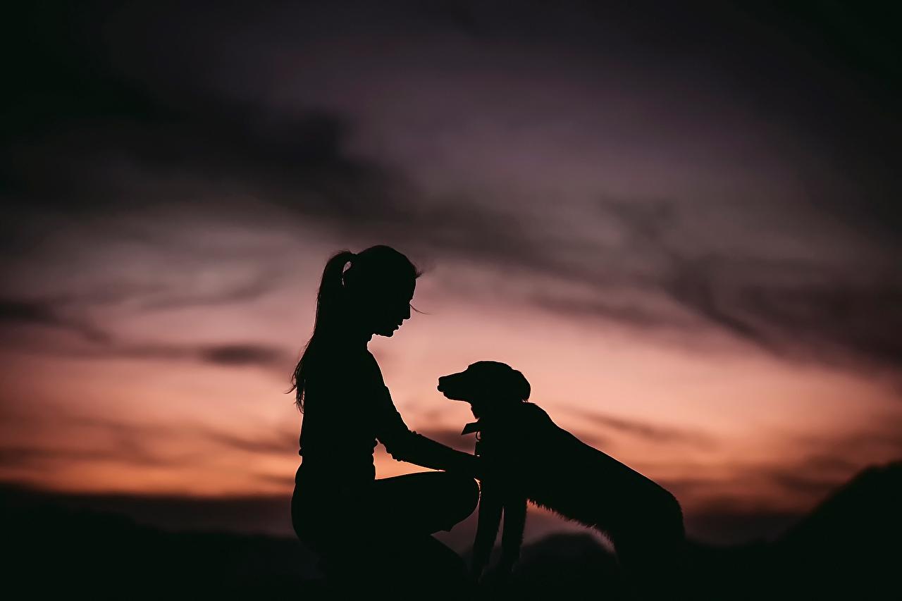 Фотографии собака Силуэт Девушки Животные Собаки силуэты силуэта девушка молодые женщины молодая женщина животное