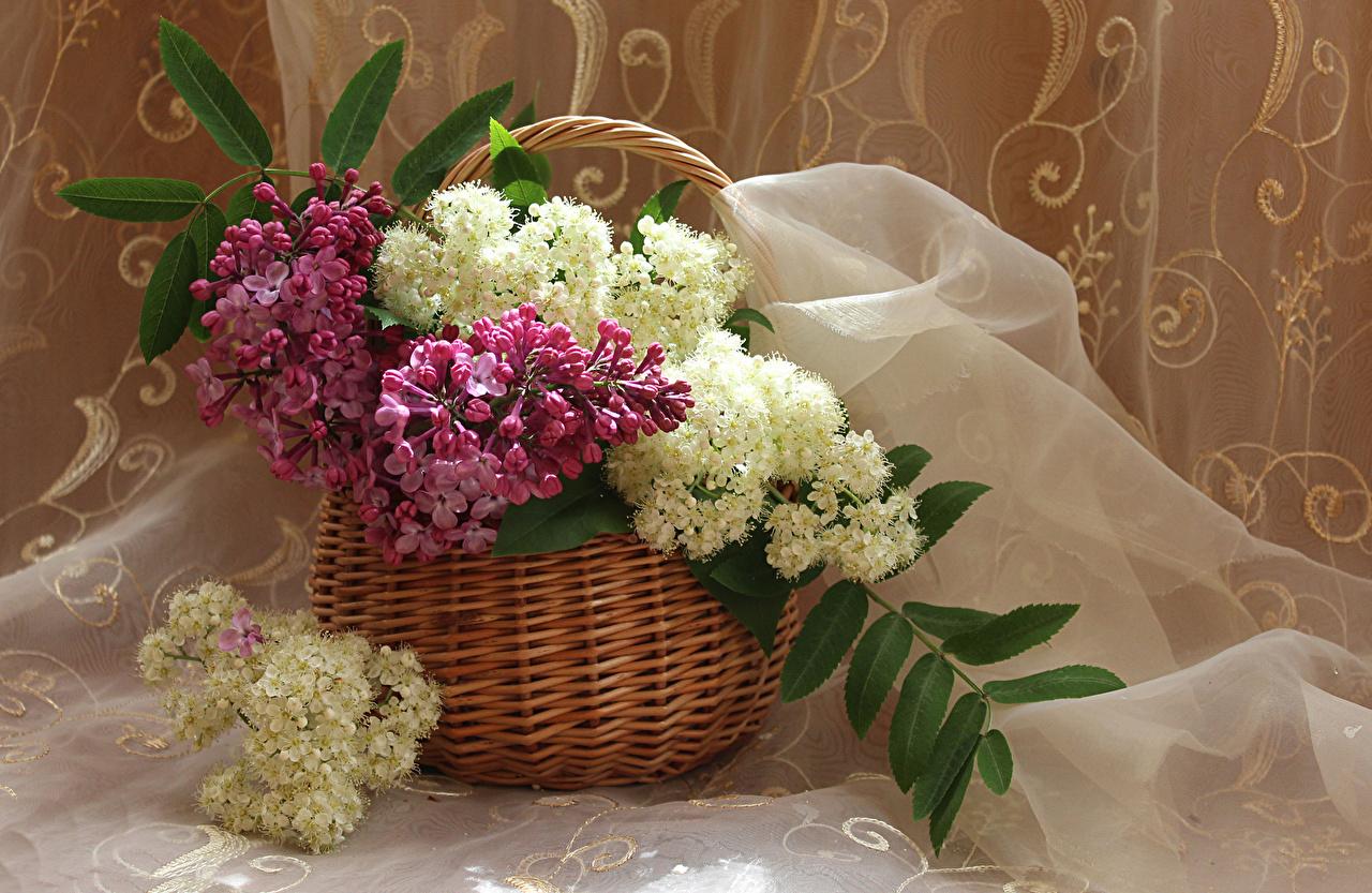 Фотографии Цветы Сирень корзины Ветки цветок Корзина Корзинка ветвь ветка на ветке