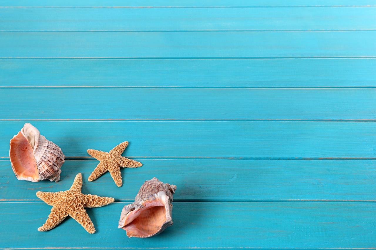 Картинка Морские звезды Ракушки Доски