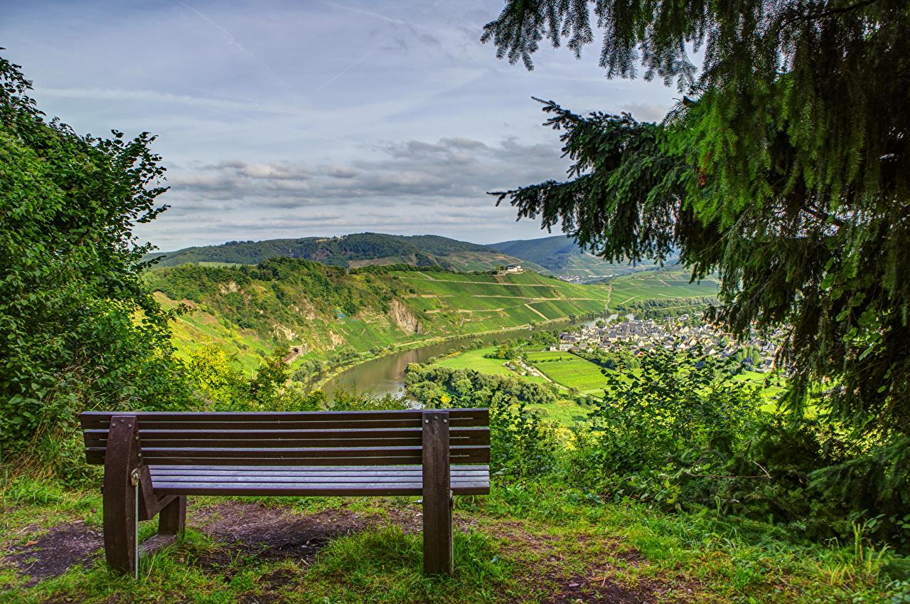 Фото Германия Pünderich Ель Природа Пейзаж траве Скамья ели Трава Скамейка