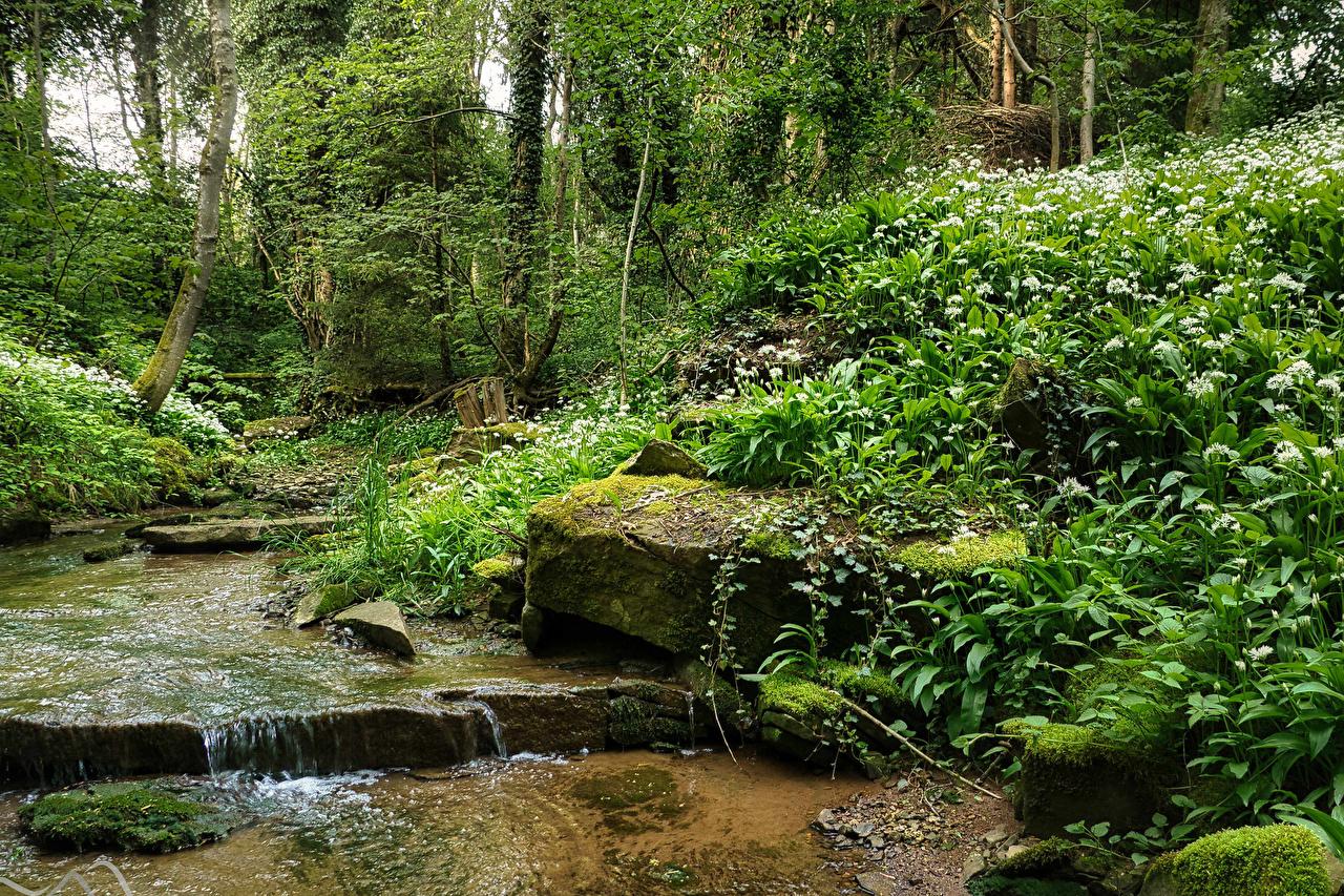 Обои для рабочего стола Германия Pliezhausen ручеек Природа Леса Мох Камни дерево Ручей лес мха мхом Камень дерева Деревья деревьев