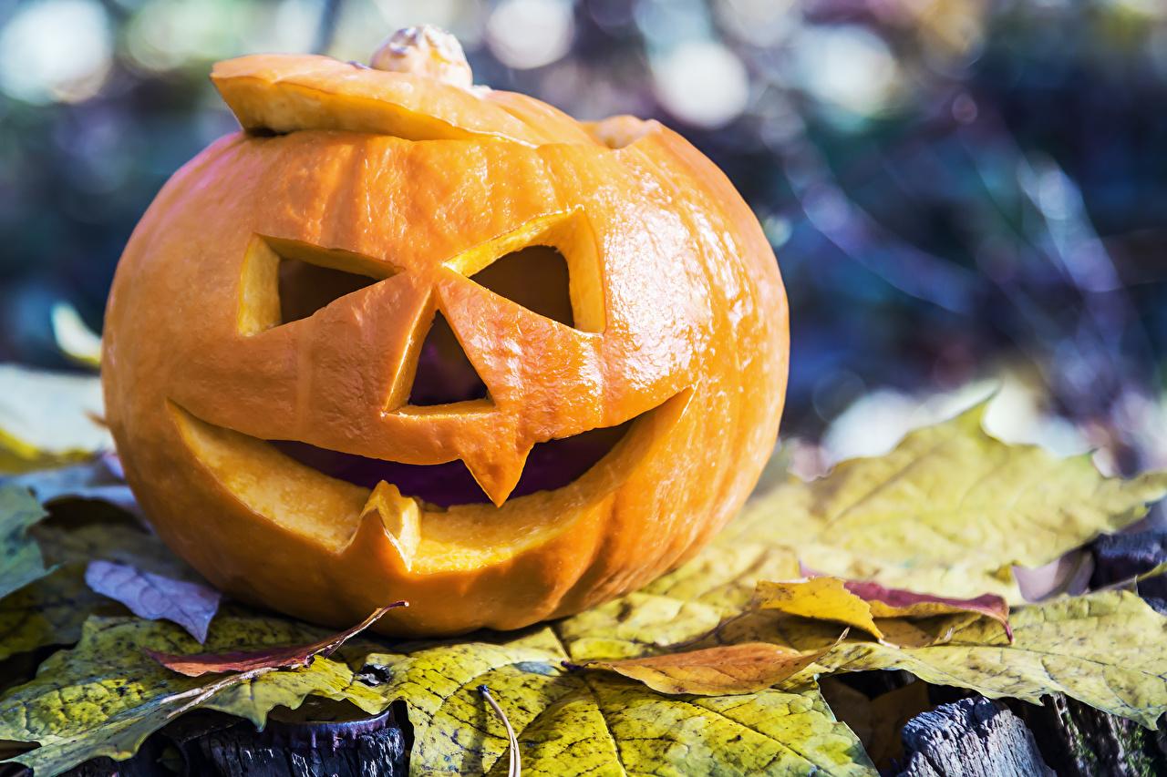 Фото лист Тыква хэллоуин Крупным планом Листья Листва Хеллоуин вблизи