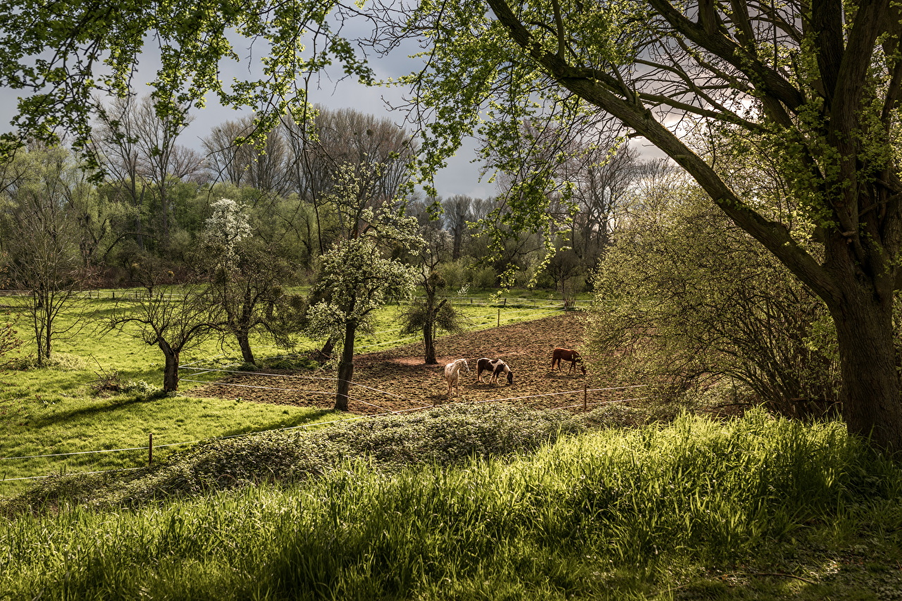 Картинка Лошади Природа весенние Луга Цветущие деревья лошадь Весна