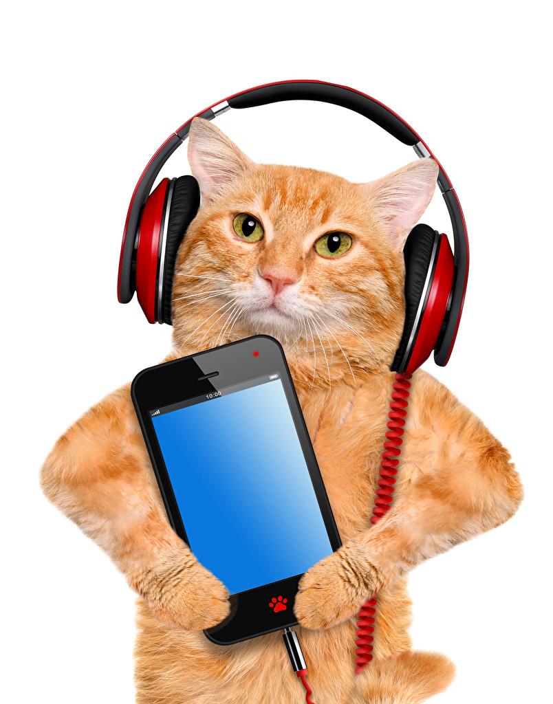 Обои для рабочего стола кошка Наушники Смартфон Рыжий Животные белом фоне  для мобильного телефона кот коты Кошки в наушниках сматфоном смартфоны рыжая рыжие животное Белый фон белым фоном