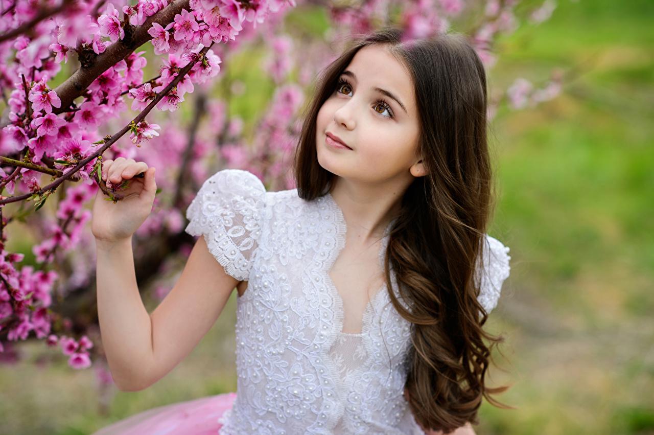 Фотография Девочки Красивые ребёнок Руки Цветущие деревья девочка красивый красивая Дети рука